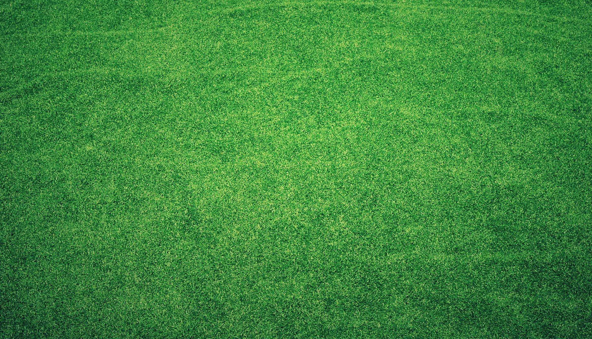 grass-background